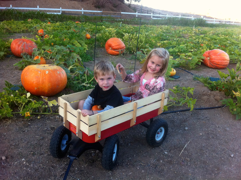 central coast pumpkin patch