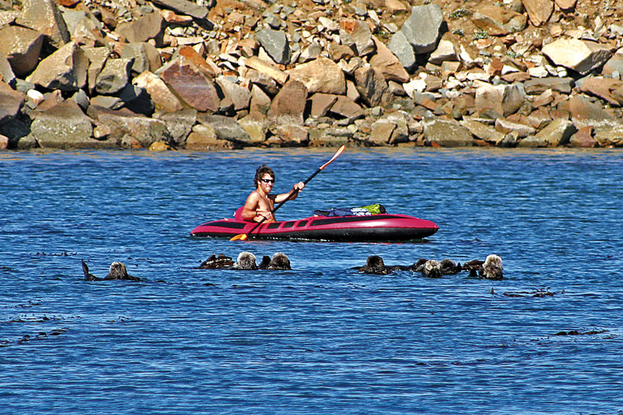 1-Raft-of-otters-and-kayaker-2
