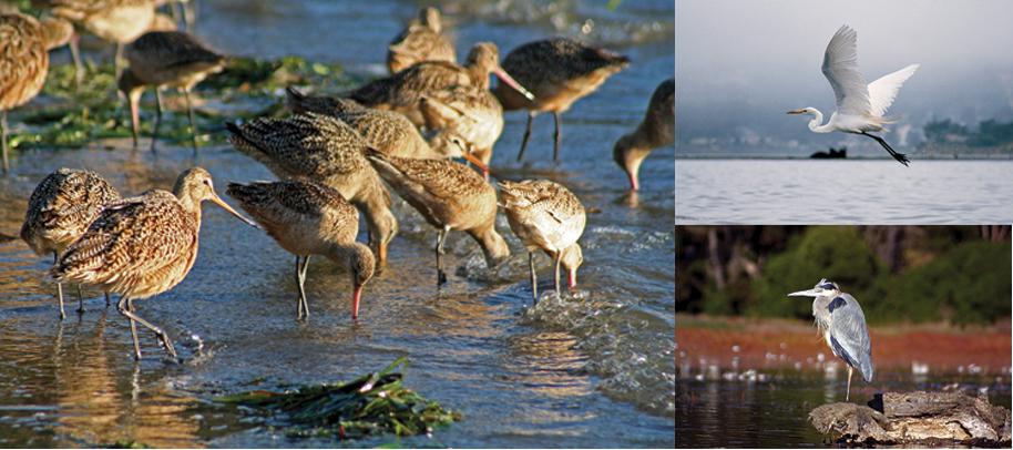 Birdwatching central coast