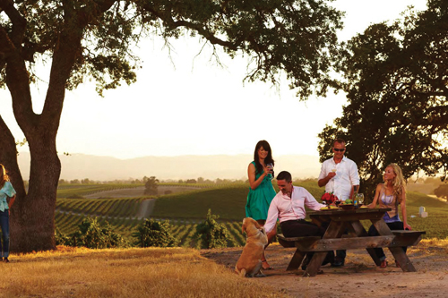 Walk the gardens, sit beneath an old oak tree & enjoy spectacular views from the hilltop while enjoying a bottle of wine available at Cellar360. Photo courtesy of Cellar360.