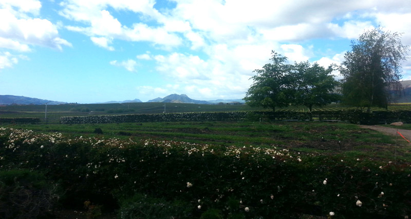 Gorgeous Edna Valley
