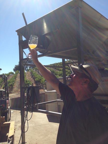 Steve Gleason inspects a new batch in the Paso sun.