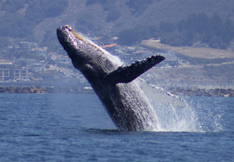 Central coast sailing charters whale