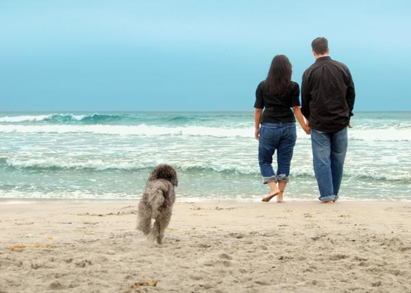 Traveling with dogs in san luis obispo