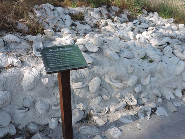fossil beds Santa Margarita Ranch