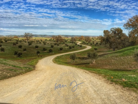 Olivas Road